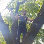 jimey-tree